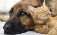 6 โรคสำคัญที่สุนัขและแมวเป็นร่วมกันได้
