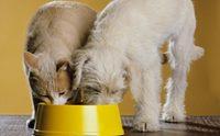 ข้อควรรู้ ... ทำไมน้องหมาห้ามกินอาหารแมวเหมียว?