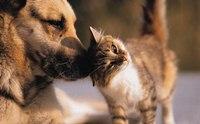 รู้จักไรในหู (Ear mites) ศัตรูตัวสำคัญของสุนัขและแมว