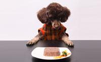 เติมเต็มความรักให้น้องหมาด้วย อาหารสุนัข Cesar