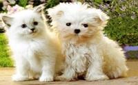 แอบส่องแมวหมาฝาแฝดแชะภาพคู่