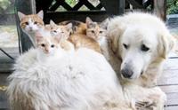 แม่หมากับลูกแมวสุดเลิฟ