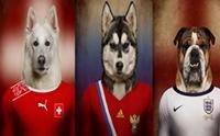 ภาพถ่ายน้องหมากับชุดนักบอลใน World Cup