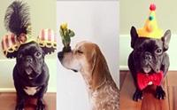รวมรูปน้องหมาสุดป๊อปใน Instagram
