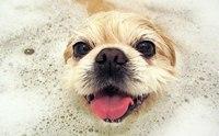 แชมพูยารักษาโรคผิวหนังของสุนัขมีอะไรบ้าง