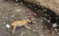 รู้จักโรคสำคัญในสุนัข ที่ (อาจ) เกิดจากมลพิษในเมือง