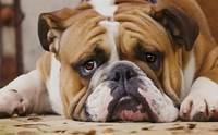 4 วิธีรักษาสุนัขด้วยตัวเองที่ทำให้สัตวแพทย์ปวดหัว