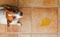 5 ปัจจัยเสี่ยงเกิดโรคนิ่วในทางเดินปัสสาวะสุนัข