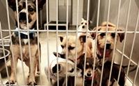 รวมภาพน้องหมาในศูนย์พักพิงทั่วโลก