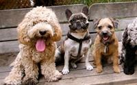 6 วิธีเลี้ยงสุนัขอย่างรับผิดชอบ เพื่อไม่ให้มีปัญหากับเพื่อนบ้าน