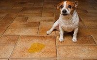 4 วิธีรับมือกับโรคนิ่วในทางเดินปัสสาวะสุนัข