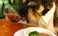 เปรียบเทียบชัดๆ อาหารประเภทไหนดีกับสุนัขที่สุด !