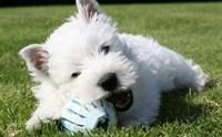 พฤติกรรมน่าปวดหัวของ 5 สายพันธุ์น้องหมาขาสั้นสุดฮิต!