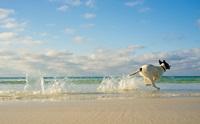 สงสัยไหม? ถ้าสุนัขกินน้ำทะเล แล้วจะเกิดอะไรขึ้นกับร่างกายของเขา