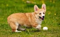 ออกกำลังกายอย่างไร ให้ปลอดภัยกับสุนัขขาสั้น!