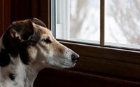 ทำอย่างไร ... เมื่อน้องหมาอยู่ในภาวะวิตกกังวลจากการถูกแยก