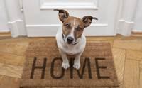 5 วิธีเตรียมพร้อม เมื่อจำเป็นต้องทิ้งสุนัขไว้บ้านตามลำพัง