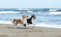 รวมภาพน้องหมากับทะเลแสนสวย