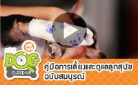 วิธีการปฐมพยาบาลพันเฝือกอ่อนแบบง่ายๆ ให้น้องหมา [Clip]