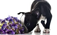 เทคนิคการลดความเครียดให้สุนัขจากกลิ่นบำบัด