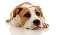 ฝึกน้องหมาขับถ่ายด้วยการทำโทษแบบถูกวิธี