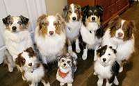 รวมสุดยอดเทคนิคการดูแลสุนัขให้สุขภาพดี ประจำปี 2014