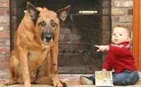 รวมเด็ด 7 พฤติกรรมน้องหมา ที่ผู้เลี้ยงมักเข้าใจผิด คิดไปเอง มากที่สุด!