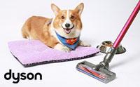 Review: ขจัดปัญหาขนหมาในบ้านด้วยเครื่องดูดฝุ่น Dyson DC62