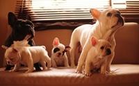 ฮอตฮิต! 10 สายพันธุ์น้องหมา ถูกพูดถึงมากที่สุดปี 2014