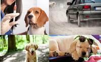 รวมเรื่องราวสุขภาพน้องหมาที่ได้รับความสนใจที่สุดในปี 2014