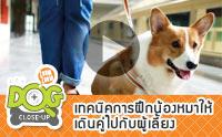 เทคนิคการฝึกน้องหมาให้เดินคู่ไปกับผู้เลี้ยง [Clip]