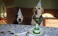 ระวัง! 5 นิสัยสุดแย่ของน้องหมา ที่เกิดขึ้นได้ถ้าถูกสปอยล์