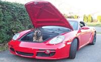 รวมภาพน้องหมากับรถยนต์สุดหรู