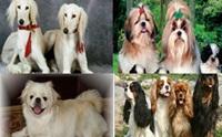 6 สายพันธุ์ ที่มาจากราชวงค์ในอดีต