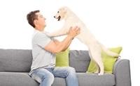 เคล็ด (ไม่) ลับ การฝึกสุนัขไม่ให้ขึ้นโซฟา