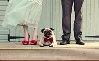 10 ปรัชญาความรักฉบับหมาๆ พัฒนาชีวิตคู่