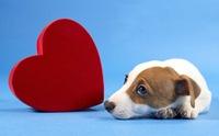5 โรคหัวใจพิการแต่กำเนิดที่เกิดได้ในสุนัข