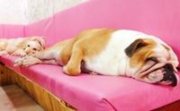 Review : ร้าน คาเพแกเน คาเฟ่น้องหมาสุดน่ารักในเกาหลีใต้