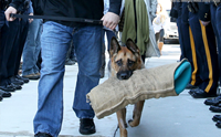 สมเกียรติ! มะกันจัดพิธีเกษียณสุนัขตำรวจฮีโร ก่อนการุณยฆาตอย่างสงบ