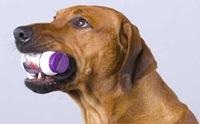 อาการแบบนี้ใช่น้องหมาแพ้ยาหรือเปล่า