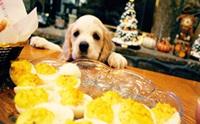 รวมภาพน่ารักๆ  เมื่อน้องหมาหิว