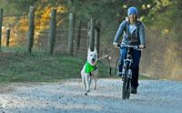 เทคนิคง่ายๆ จูงน้องหมาให้วิ่งคู่ไปกับจักรยานแบบไม่มีล้ม