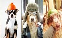 ภาพฮาๆ เมื่อน้องหมาใส่หมวกแปลกๆ