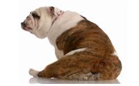 รู้หรือไม่ ต่อมปล่อยกลิ่นของสุนัขอยู่บริเวณไหนบ้าง?