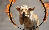 ครบสรรพ...การปฐมพยาบาลสุนัขแผลไหม้ในกรณีต่าง ๆ