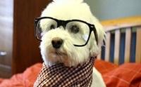 รวมภาพน้องหมาแว่นฮิปสเตอร์สุดๆ!!