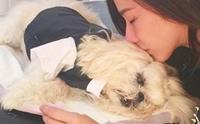 ดราม่า!! ผิดไหม เมื่อซุปตาจะจัดงานศพให้น้องหมาสุดรัก