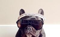 รวมพล! 10 สายพันธุ์น้องหมาแนวฮิปสเตอร์ ดูดี๊ดีมีเอกลักษณ์