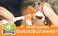 เกิดเป็นน้องหมา ต้องแปรงฟันด้วยเหรอ ? [Clip]