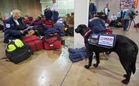 สุนัขค้นหา! หนึ่งกำลังสำคัญในการช่วยเหลือมนุษย์จากภัยพิบัติ